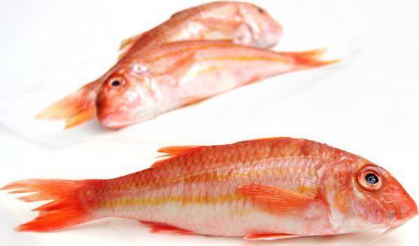 морская рыба барабулька