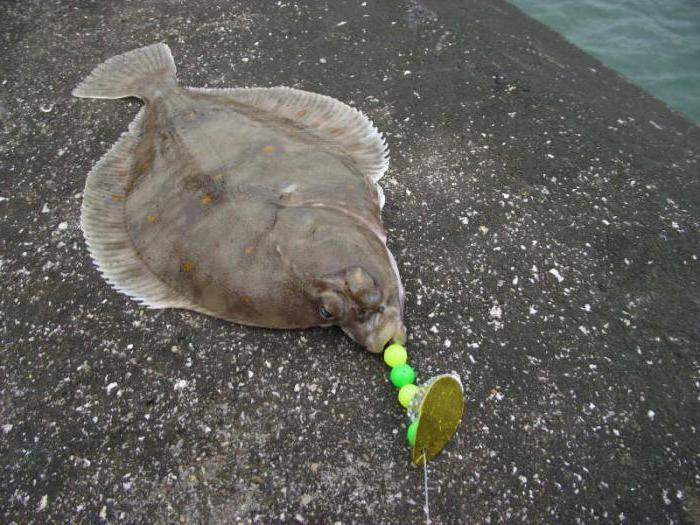 рыба камбала где водится