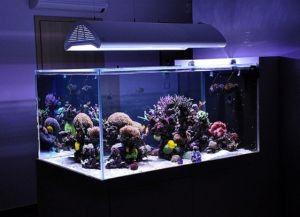 Что нужно для аквариума с рыбками3