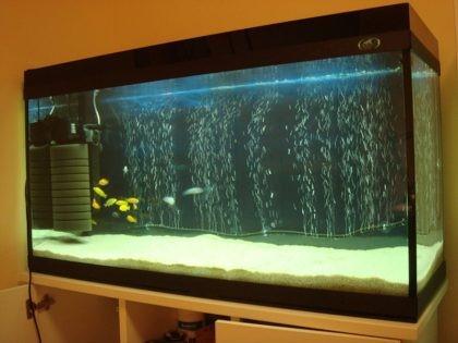 ajeracija-v-akvariume6