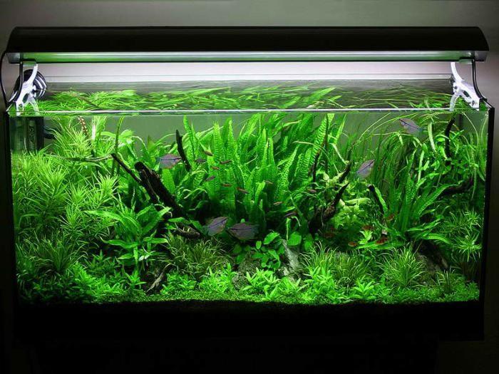 домашний аквариум с чего нужно начинать
