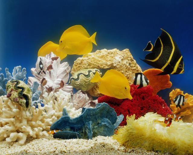как выбрать рыбок для домашнего аквариума