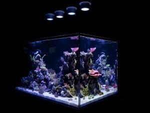 Что нужно для домашнего аквариума