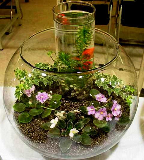 Сад в аквариуме фото