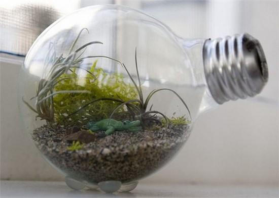 Герметичный сад в бутылке-лампочке очень редко нуждается в поливе