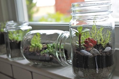 В открытых флорариумах выращивать растения проще - постоянное проветривание уменьшает шансы на загнивание
