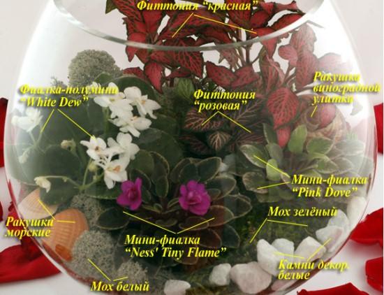 Пример растительной композиции в круглом аквариуме