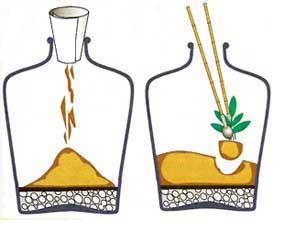 Насыпаем в бутылку почву и высаживаем растения