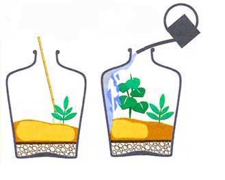 Поливать растения следует, вливая воду по стенке бутылки