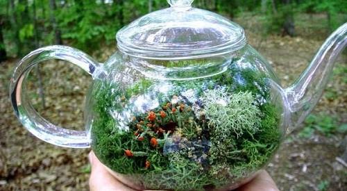 Флорариум в стеклянном чайнике может проветриваться в любой момент - достаточно открыть крышку