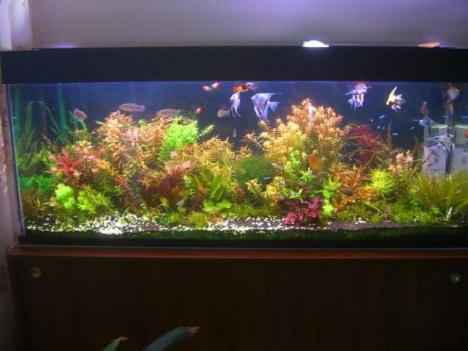 как дезинфицировать аквариум