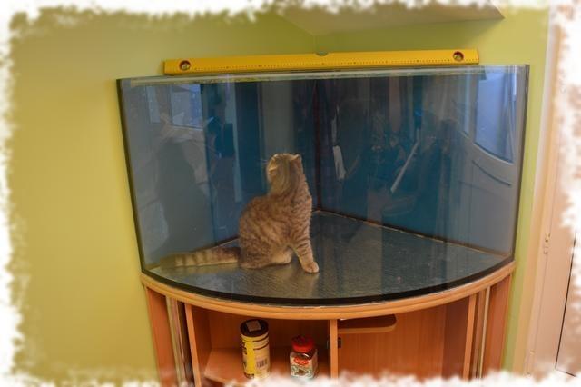 выравнивание аквариума по уровню