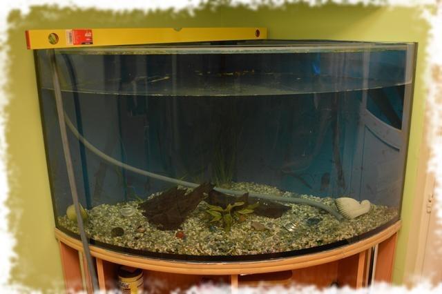 как заливать воду в аквариум
