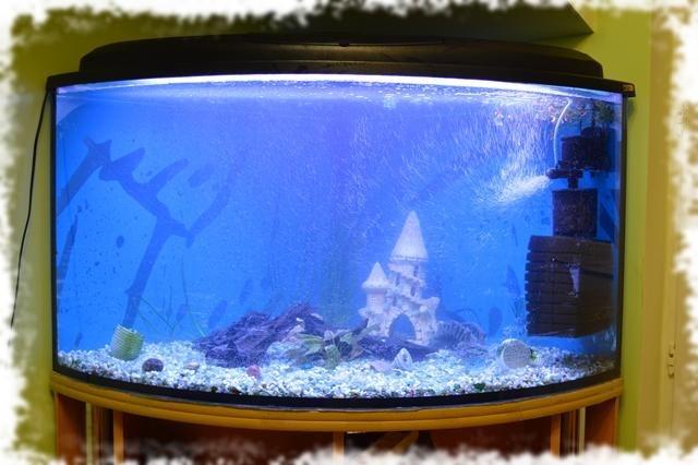 новый аквариум