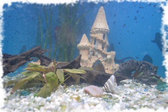 замок в аквариуме