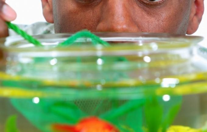 как поставить аквариум