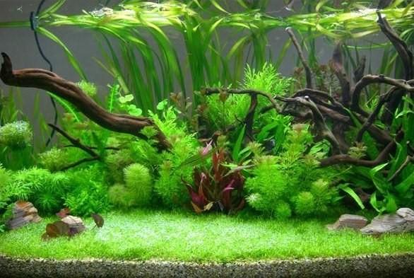 как мыть живые растения