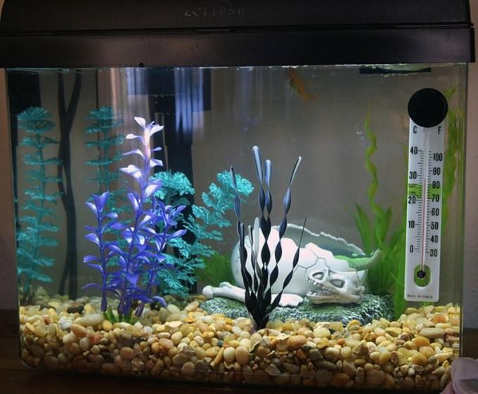 Какой грунт использовать для аквариума