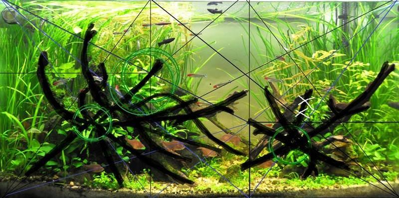 золотые трехугольники в аквариуме