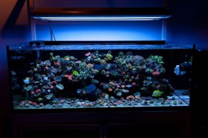 strong_style_color_b82220_fish_tank_strong_55x3w_led_aquarium_light_for_marine_coral_reef