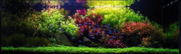 Дизайн аквариума своими руками 250 литров