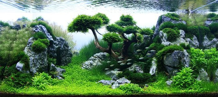 Ландшафтный дизайн аквариума своими руками