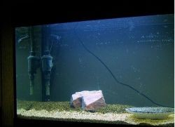 Помпа для аквариума