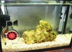 Помпа для аквариума бесшумная