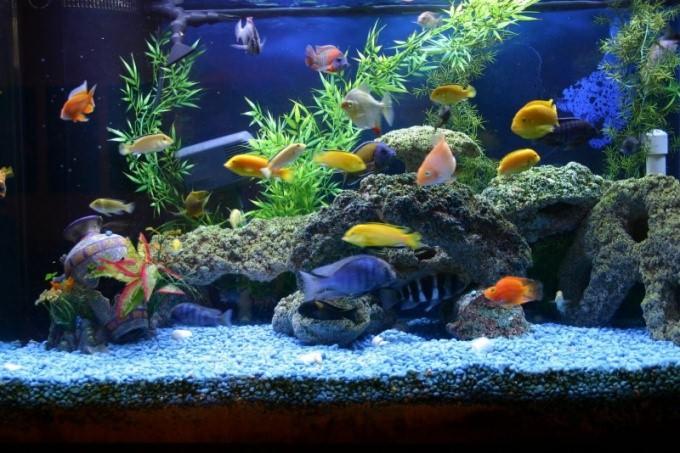 Большой общий аквариум с рыбками.