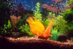 рыбки дохнут в аквариуме