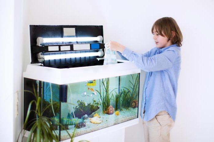 инструкция как ухаживать за рыбками в аквариуме