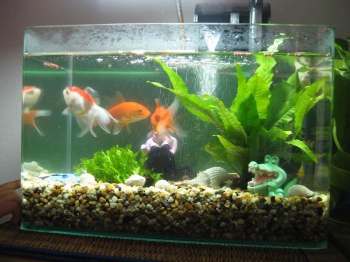 инструкция как ухаживать за рыбками в аквариуме по пунктам