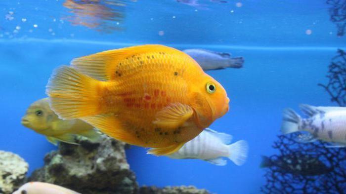 как ухаживать за рыбками в аквариуме инструкция