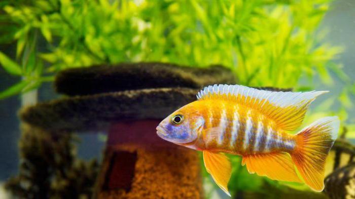 краткая инструкция как ухаживать за рыбками в аквариуме