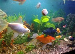 Уход за аквариумом и рыбками для начинающих1