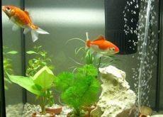 Фильтр для маленького аквариума