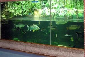 Фитофильтрф для аквариум