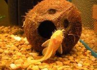 Гроты для аквариума14