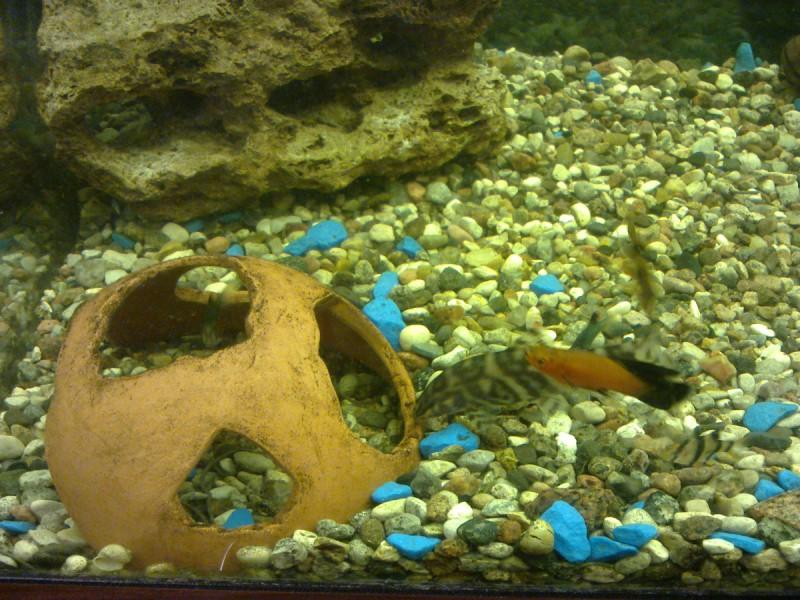 грот в аквариуме