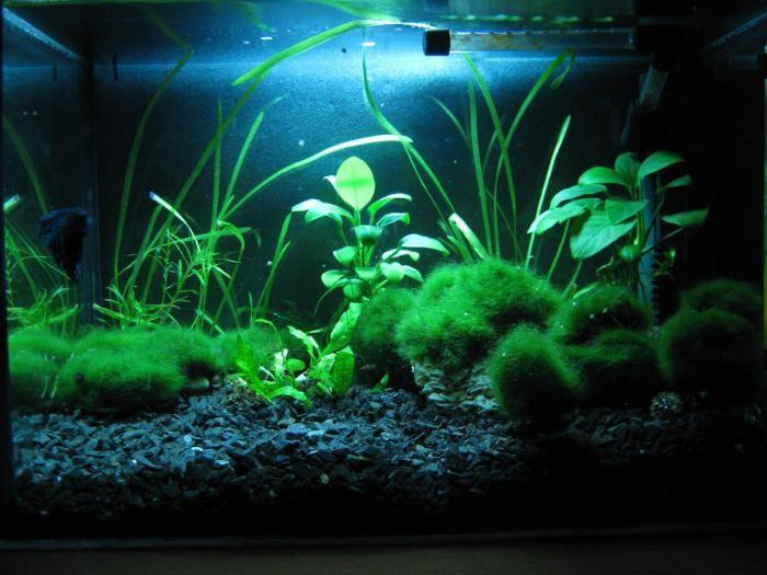 черный грунт для аквариума