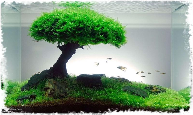результат укладки грунта под аквариумные растения
