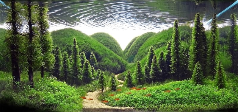 травник аквариум