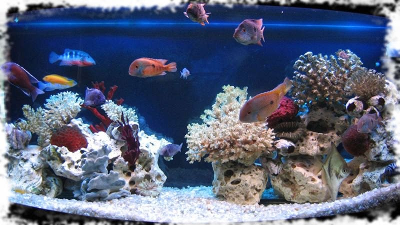 псевдо море оформление аквариума
