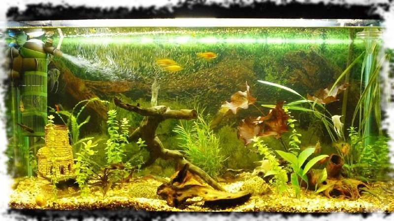 оформление аквариумного травника