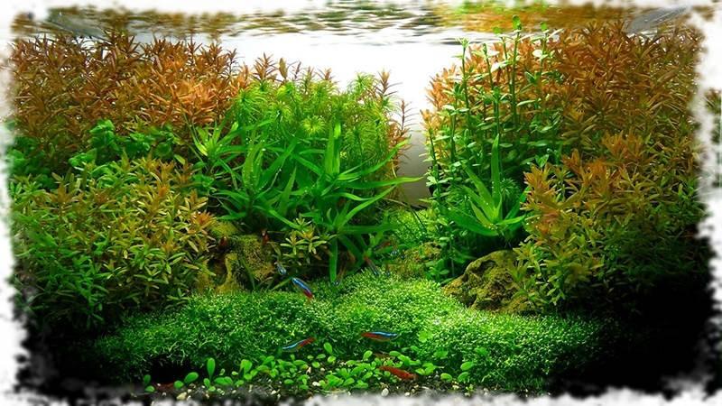 оформление голландского аквариума