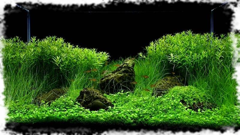 пример оформления аквариума с растениями