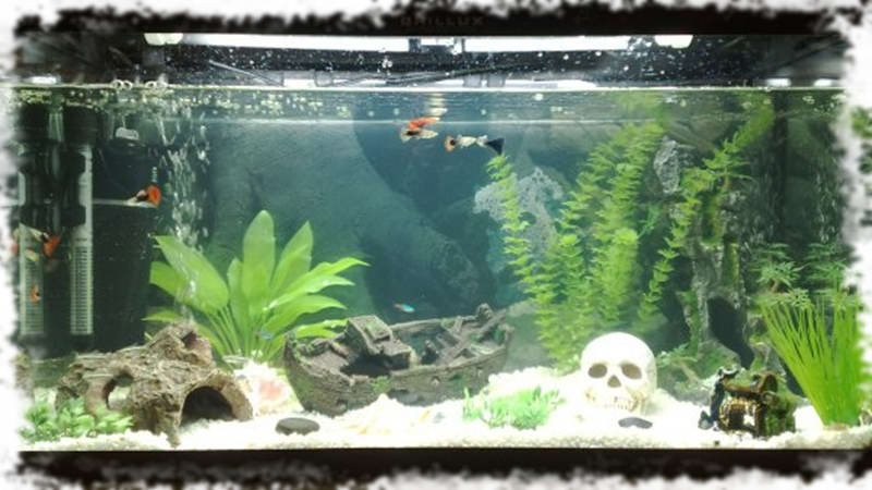 оформление игрового аквариума