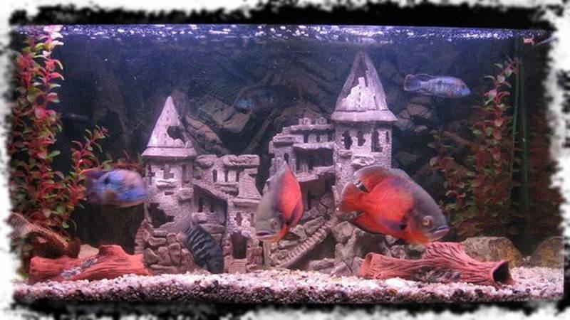 оформление тематического аквариума