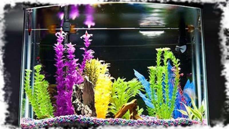 оформление Glo аквариума