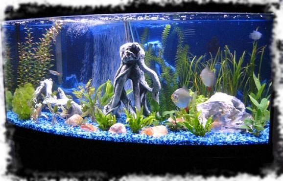 оформление светящегося аквариума